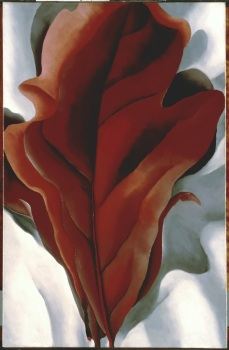 Georgia O'Keeffe (1887-1986) Large Dark Red Leaves on White, 1925. Photo Courtesy Orange County Museum of Art