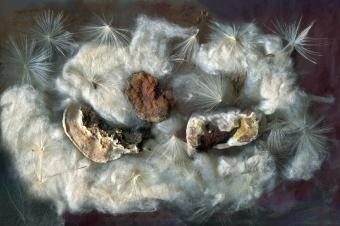 """Aline Mare. """"Mushroom Bursts"""" Hexon/Hexoff at Noysky Projects. Photo Courtesy of the Gallery."""