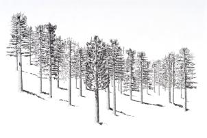 Jennifer Celio. Can't See the Forest. Photo Courtesy of Jennifer Celio.