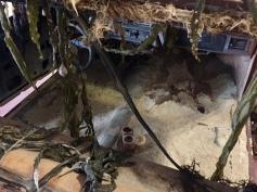 Hydrogenesis. 1970 El Camino, sand, bronze heron, palm leaf, seaweed, cement, wood, candle, sea urchin, salt. 2017. Ohlsson/Dit-Cilinn: HYDROGENESIS. HILDE L.A., Mid-City. Photo Credit Shana Nys Dambrot.