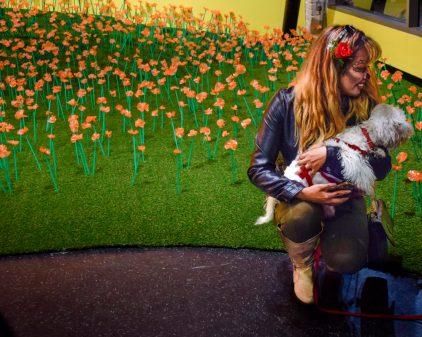 Rebecca Chernow: #superbloom. Photo courtesy Grand Central Art Center.