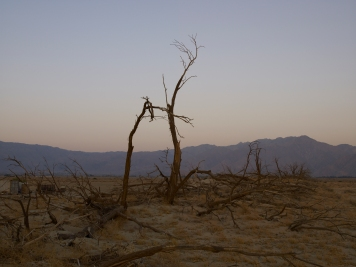"Richard Misrach, ""Dead Trees, Anza Borrego Desert, California"", Marc Selwyn Fine Art; Image courtesy of the gallery"
