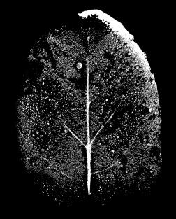 L Aviva Diamond, Tiny Immensity #3 Night Tree Wet Leaf, Photo courtesy of the artist.