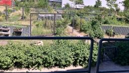 Community garden at ZK U. Photo credit: Lara Salmon