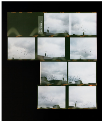 Zoe Leonard Roll #11, 2006/16, C-print, Edition 4/6 + 2 AP. Photo courtesy of the gallery.