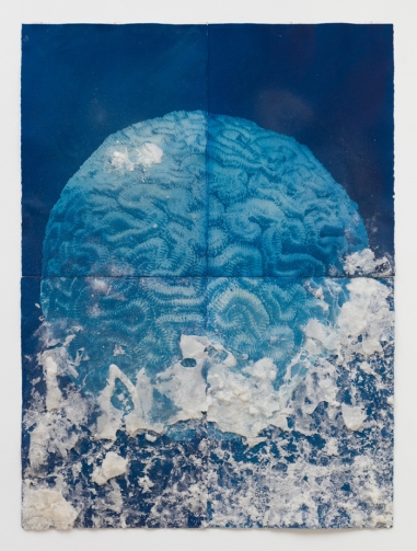 Andrea Chung, Brain Coral, Only to meet nothing that wants you, Klowden Mann; Image courtesy of the gallery