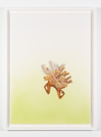 Yasmine Diaz, Cylindropuntia Sapilovii framed, If Everything is an Outrage: The Binder of Women, Track 16 Gallery; Image courtesy of the gallery